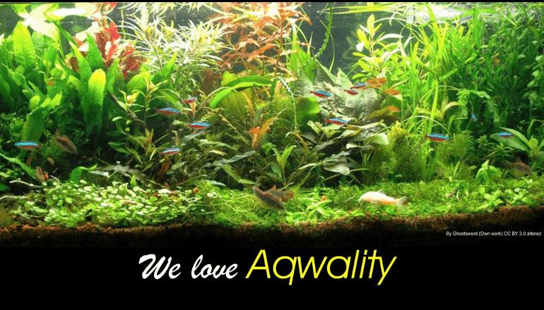 ヨーロッパ初のアクアリウム環境維持装置「Aqwality」