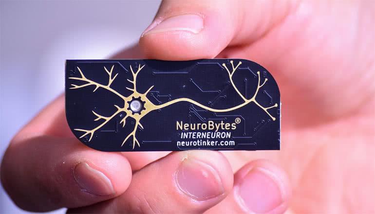 人類の神秘、神経科学をよりわかりやすく。「NeroBytes」