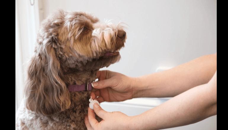 ワンちゃんのトイレトレーニング専用デバイス「Pup Potty Training」