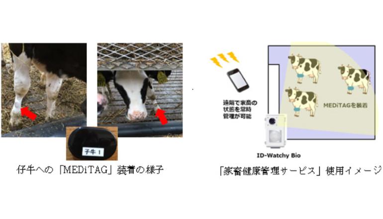 農業IoT、家畜の健康ストレス管理を実証