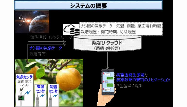 梨の病害、その発生を予測するしくみがスマホアプリで