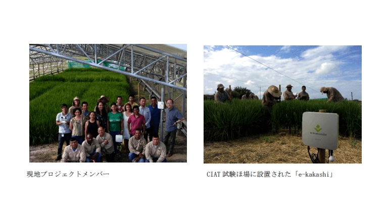 IoTでコロンビアの稲作を改善する実証実験