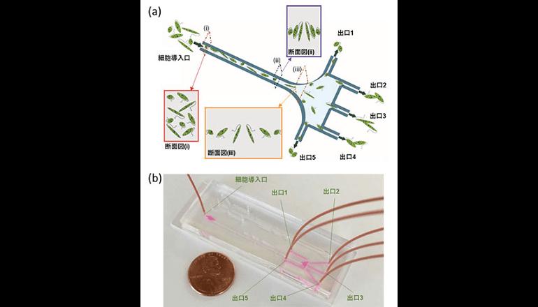 藻類バイオ燃料開発などに有望な新技術を開発