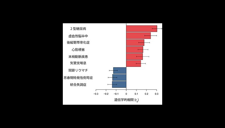 理研、日本人約16万人の遺伝情報から肥満に関わる病気や細胞を同定