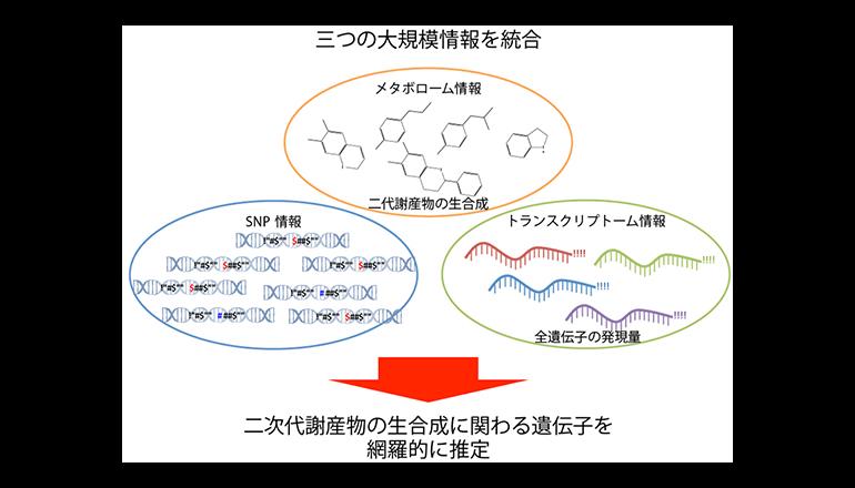 理研、植物二次代謝産物の生合成遺伝子の推定の簡便化に成功
