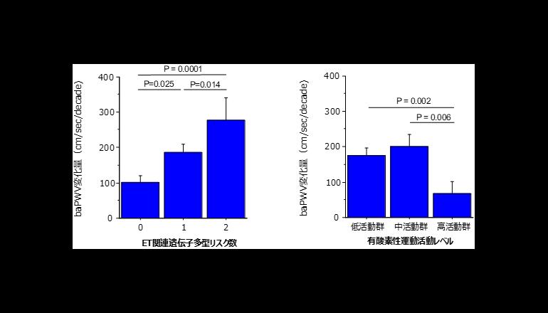 実証! 日々の有酸素運動、血管の加齢を1/3に