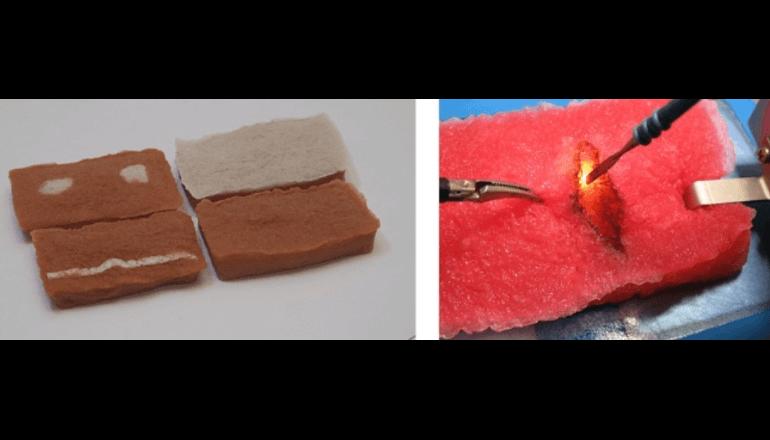 凸版印刷と寿技研、植物性食品を原料とする模擬臓器を開発