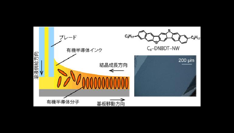 ウエハ級の有機半導体ナノシートを実現