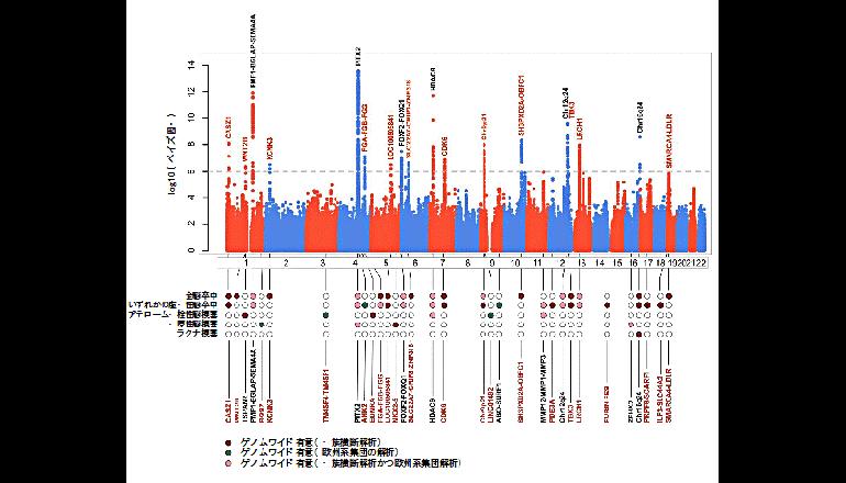 52万人のゲノム解析により脳卒中の病態を解明する新たな情報を発見