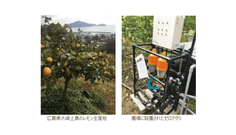 ICTでレモン栽培、国産品の安定供給へ