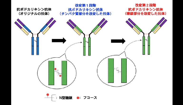 口腔がんに対する新規分子標的薬を開発