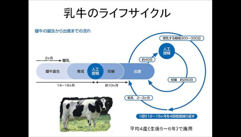 農業IoT、乳牛の妊娠判定を容易に手早く、飼料抑制にもつなげる