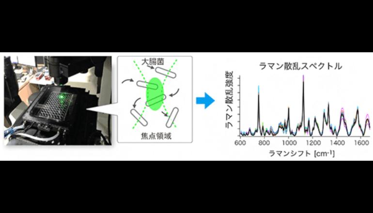 レーザーの散乱光をみるだけで薬物耐性大腸菌を判別