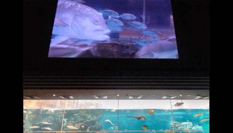 須磨海浜水族園、水中ドローンで海の生物観察イベントを開催