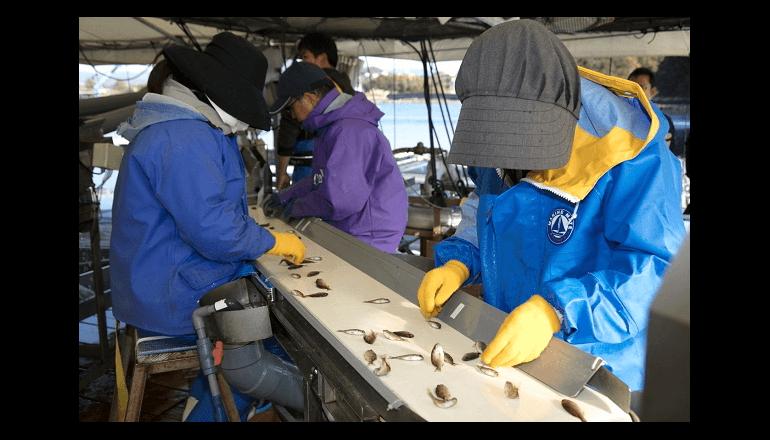 水産漁業IoT、AIにて稚魚を自動選別