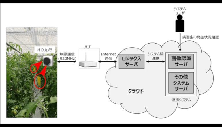 AI技術を活用して病害虫の監視業務の効率化