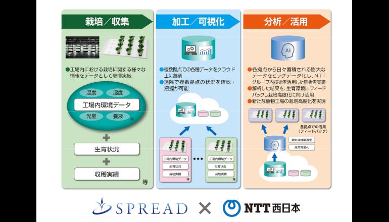 農業ビッグデータとAI活用で栽培技術革新を NTT西日本らが実証実験
