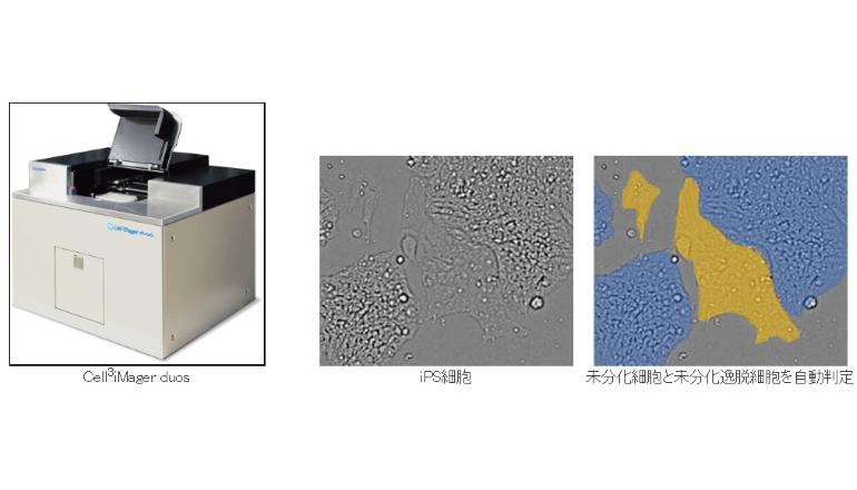 iPSなどの培養細胞、画像解析をディープラーニング技術で高精度に