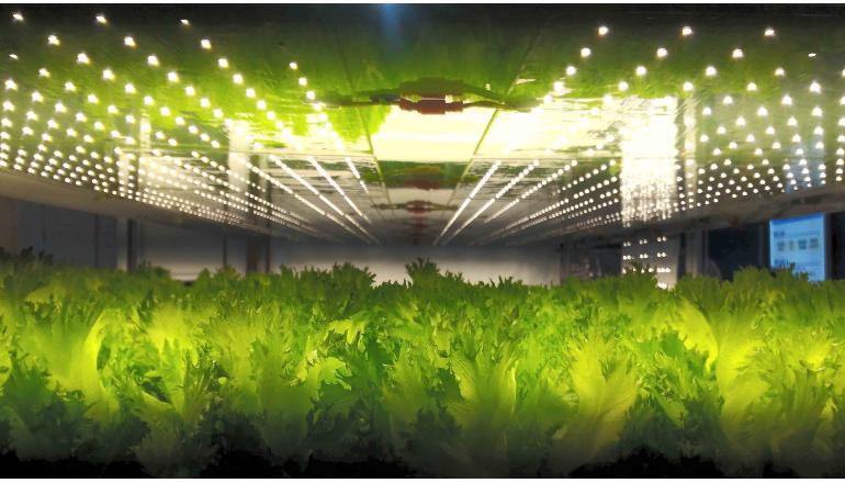 DNP、人工光を利用した植物工場向けLED照明の量産を開始
