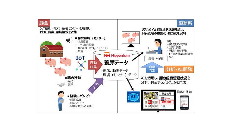 AI・IoTで豚の健康や発情兆候を判定プロジェクトを開始、日本ハム
