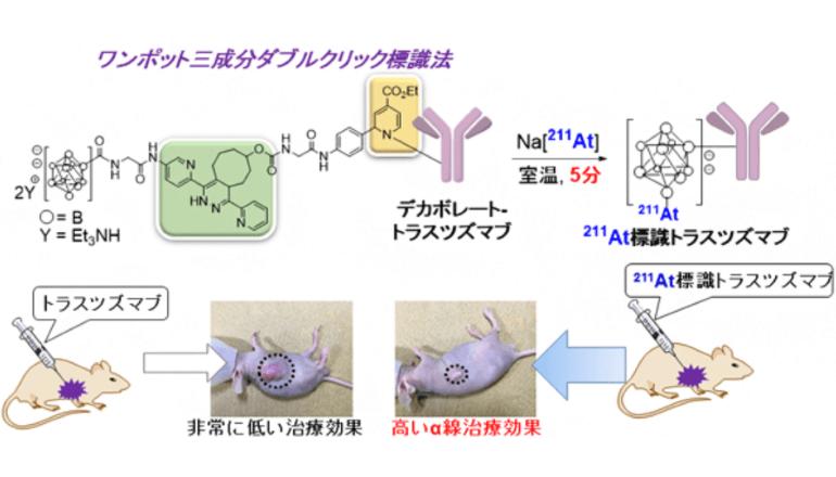 アルファ線がん治療を進展させる、アスタチン-211の標識法を開発」