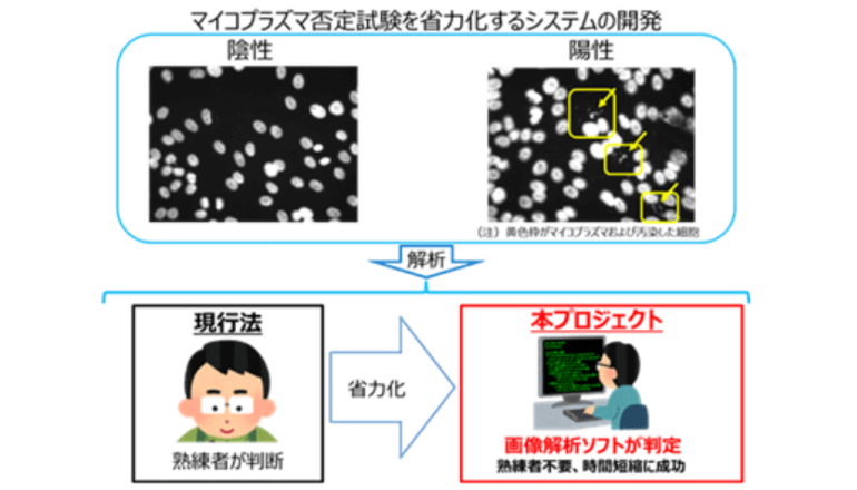 AIを応用した細胞画像判定ソフト、時短を実現。医師主導の治験へ