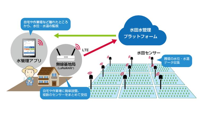IoTスマート農業、水田向けのスターターキットが登場