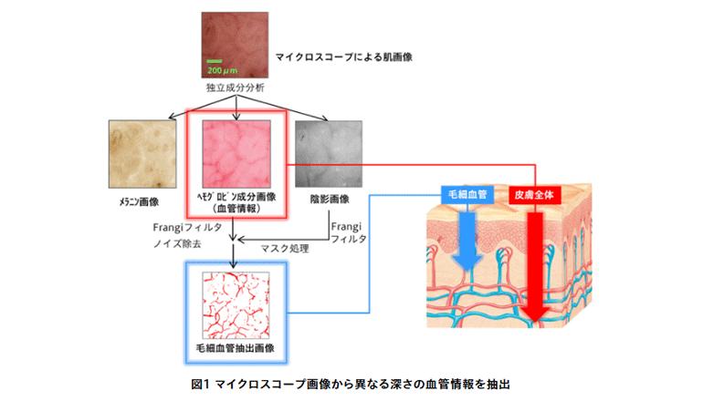 皮膚深部と表層の血流情報をいっぺんに検出して――