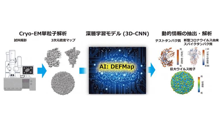 生体高分子の運動性解明に迫る、新たなAI推定手法