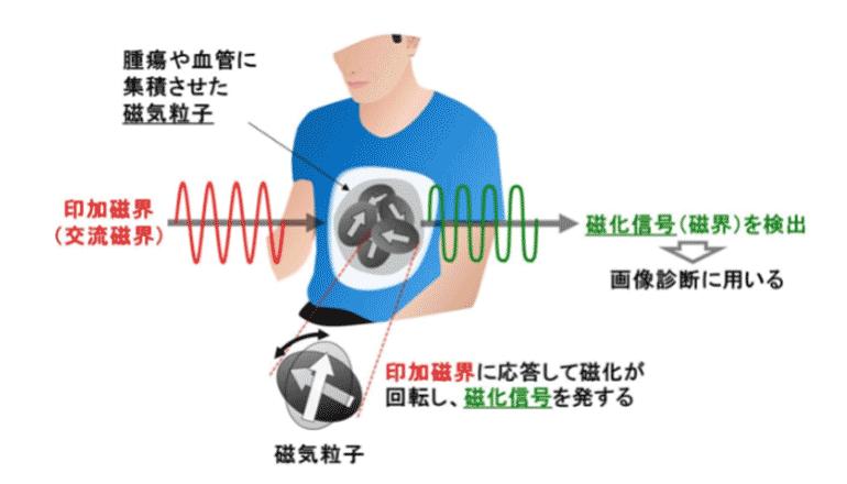 磁気粒子イメージング装置の実現に向けて、新たな画像診断技術を開発